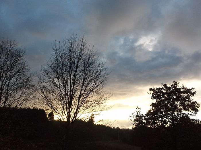 Silhouette of bare tree against cloudy sky
