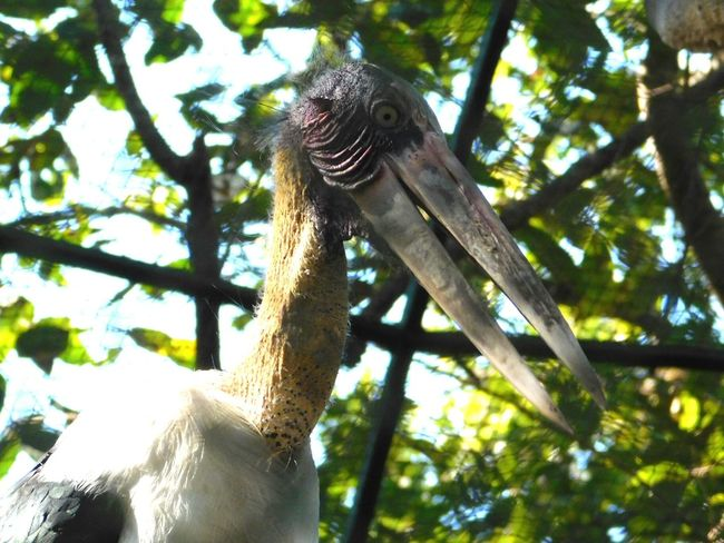 big bird in a cage Bird In A Cage For Life Lifetime Imprisonment For Nothing Bird Photography Birdof EyeEm Birds_collection Sad Truth Of Life Zoo Sentenced Life I Dream Of Skys Set Them Free Tree Animal Wildlife Low Angle View Branch One Animal Reptile Social Issues Nature No People Animal Themes Close-up