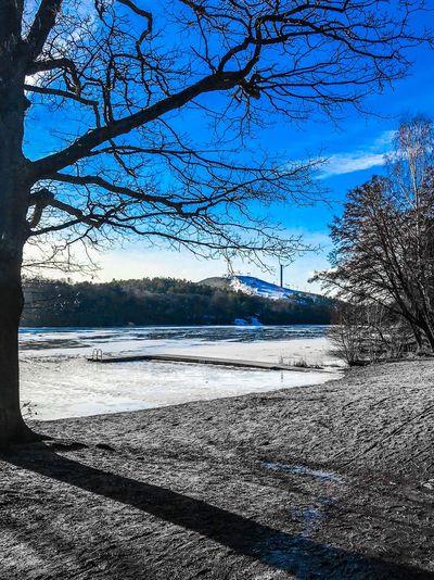 Lake Sky Tree