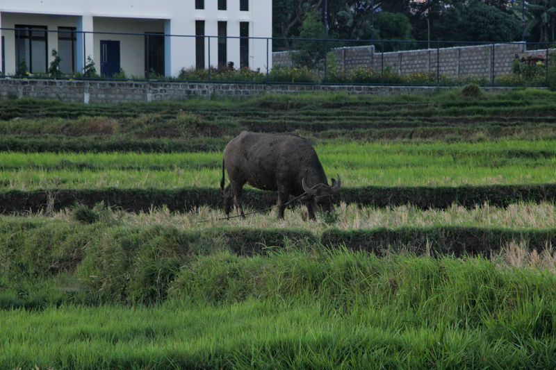 Animal Themes Day Field Grass Landscape Nature One Animal Outdoors Scenics
