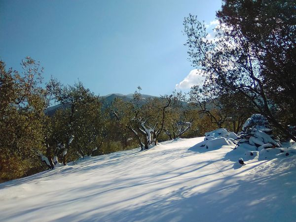 Neve Beauty In Nature Cold Temperature Day Freddo Inverno Landscape Mountain Nature No People Outdoors Scenics Sky Snow Sunlight Tranquility Tree Ulivi Winter