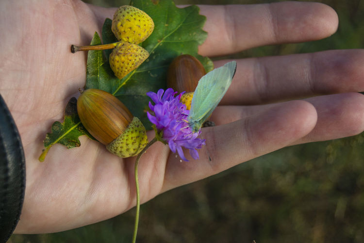 Human Hand Hand Human Body Part Flower Flowering Plant Plant One Person Holding Freshness Fragility Vulnerability  Close-up Body Part Petal Beauty In Nature Human Finger Finger Nature Unrecognizable Person Outdoors Pollen Purple Acorn Acorn Cap In Hand