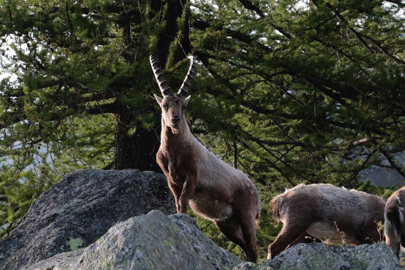 Animals In The Wild Animal Wildlife Animal Themes Nature Nature Photography Gran Paradiso Outdoors Nature Mountain View