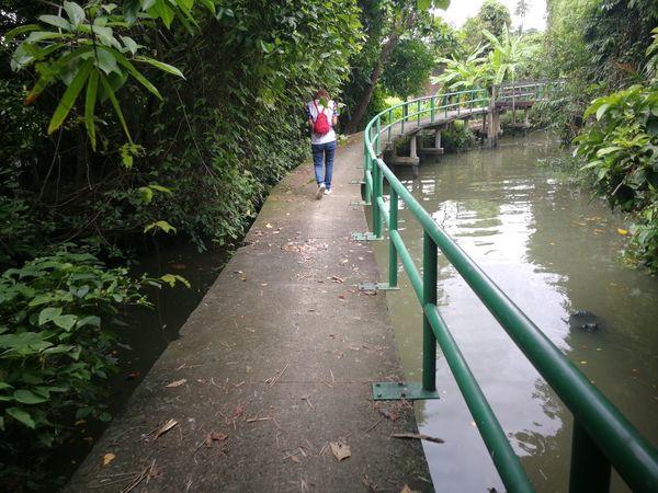 Taling Chan สวน ตลิ่งชัน Water Tree Child Full Length Footbridge Rope Bridge