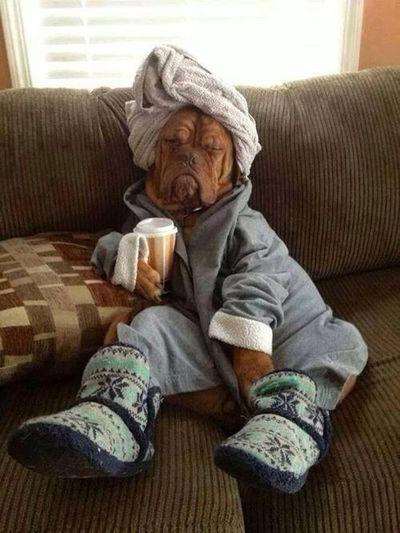I Love My Dog Dog❤ Doggy My Dog Relaxing
