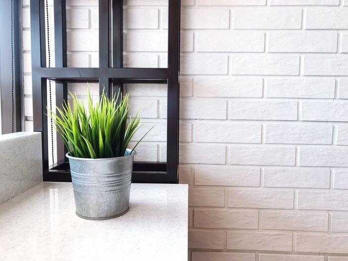 Plant Wall -