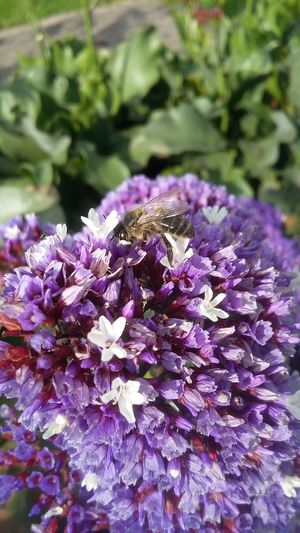 Beauty In Nature No People Close-up One Animal Growth Freshness Nature Animal Themes Fragility Outdoors Purple Flower Flower Head Day Plant Bee 🐝 Flowers Flower Collection Flowers, Nature And Beauty Flowerlovers First Eyeem Photo
