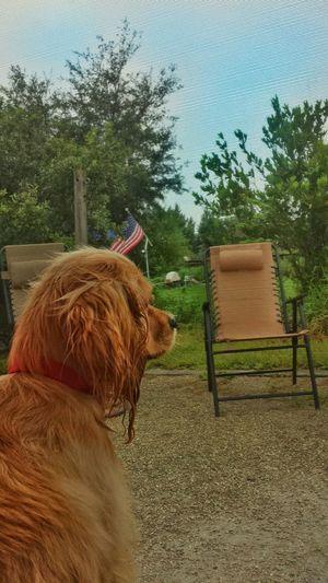 Summer Dogs Enjoying Life Camping Taking Photos No Location Needed Popular Photos Naturelovers