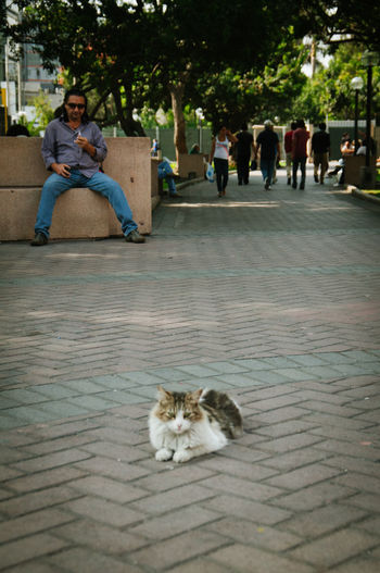 Adult Cat Day Kennedy Park Lima Outdoors Park Parque Kennedy Peru Sitting South America Stray Cat