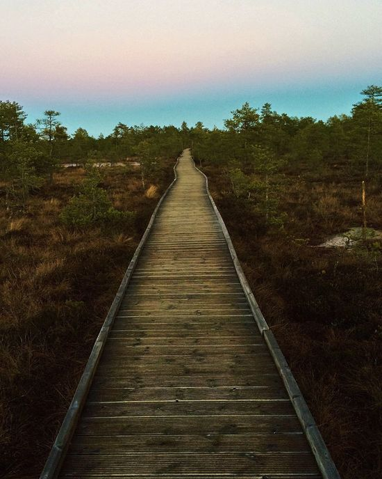 Bog Walking Around The Way Forward Tree Landscape Outdoors Clear Sky Tranquil Scene Sky Nature Tranquility Scenics No People Beauty In Nature Moorland Nature Outdoor Photography Awesome Nature PhonePhotography Walk Weekend Beauty In Nature Non-urban Scene Forest Idyllic
