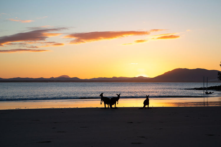 amazing evening and light... I felt so lucky alone there!!! Sunset Sky Water Silhouette Beach Sea Beauty In Nature Scenics - Nature Orange Color Land Pets Real People Domestic Mammal Animal Themes Animal Outdoors Kangaroo Group Of Animals 2018 In One Photograph Animals In The Wild Moments Of Happiness