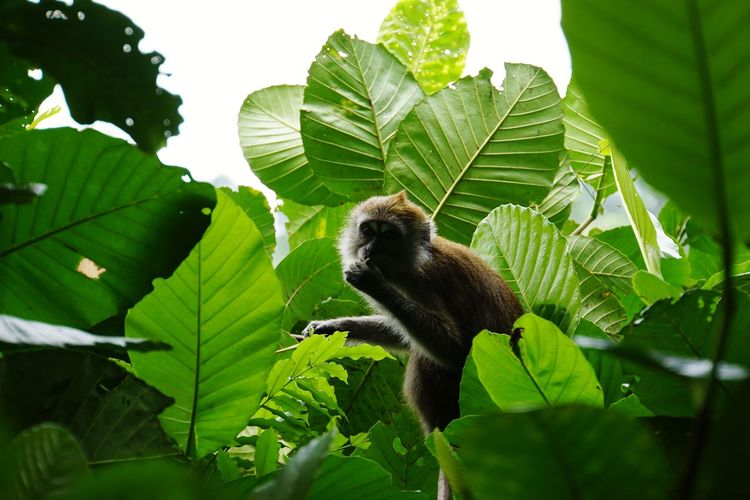 Low angle view of monkey on leaves