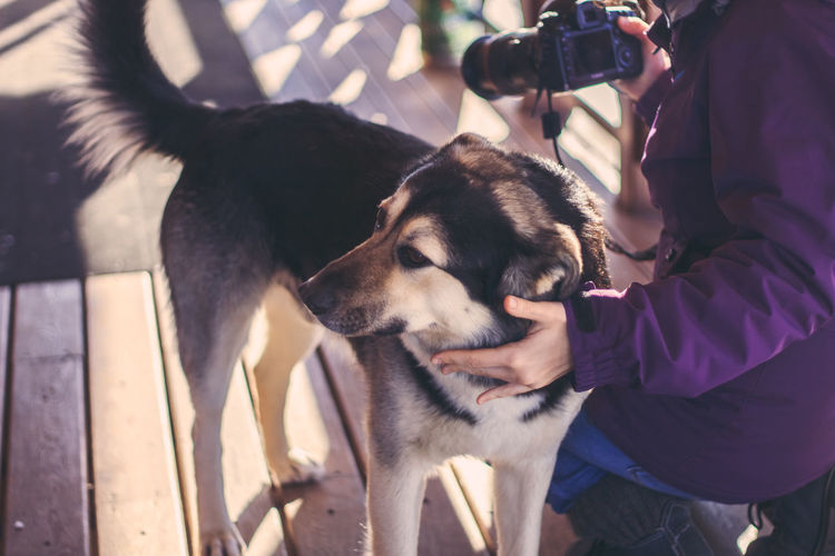 Midsection Of Person With Camera While Stroking Dog