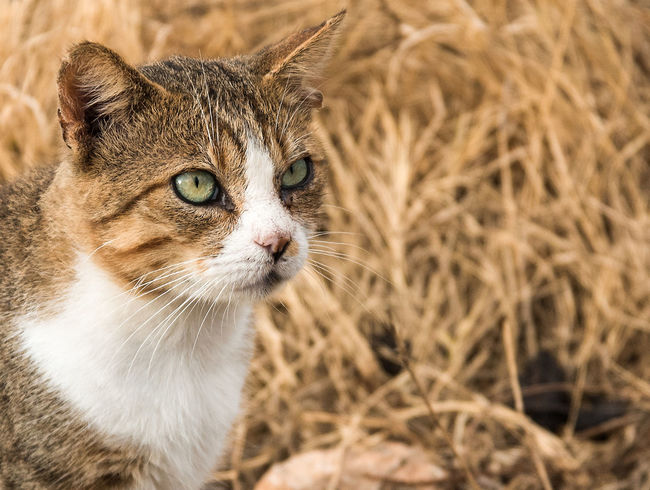 Cat Hunting Cat Cat Hunting  Cats Of EyeEm Cat♡ Feline One Animal Outdoors Pets Tabby Cat Wild Cat First Eyeem Photo