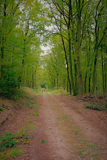 Waldspaziergang Aulhausen Waldspaziergang Forrest Photography Forrestwalk Forrest Nature