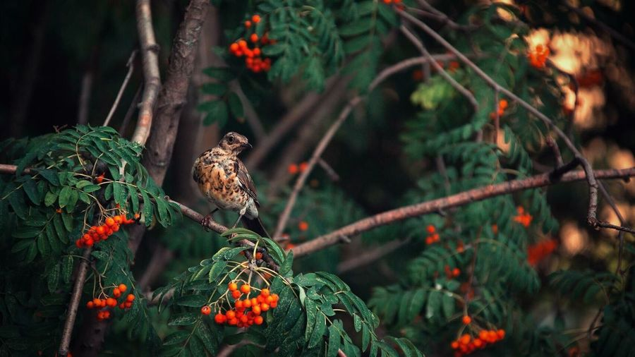 Animals In The Wild Animal Themes Animal Wildlife Nature One Animal Tree Perching Bird Growth Outdoors No People Day Plant Beauty In Nature Branch Food Freshness Mammal