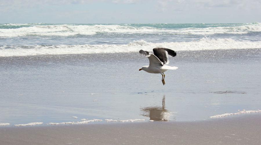 Seagull on beach by sea against sky