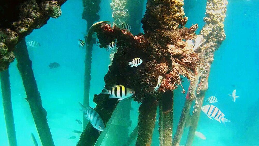 First Eyeem Photo RedSea Sealife Swimming With The Fish Snorkeling Snorkel Fish Hurghada Hurghada Sea