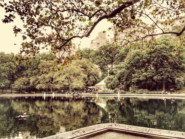 Central Park Park Trees Water New York NYC New York City USA сша ньюйорк парк