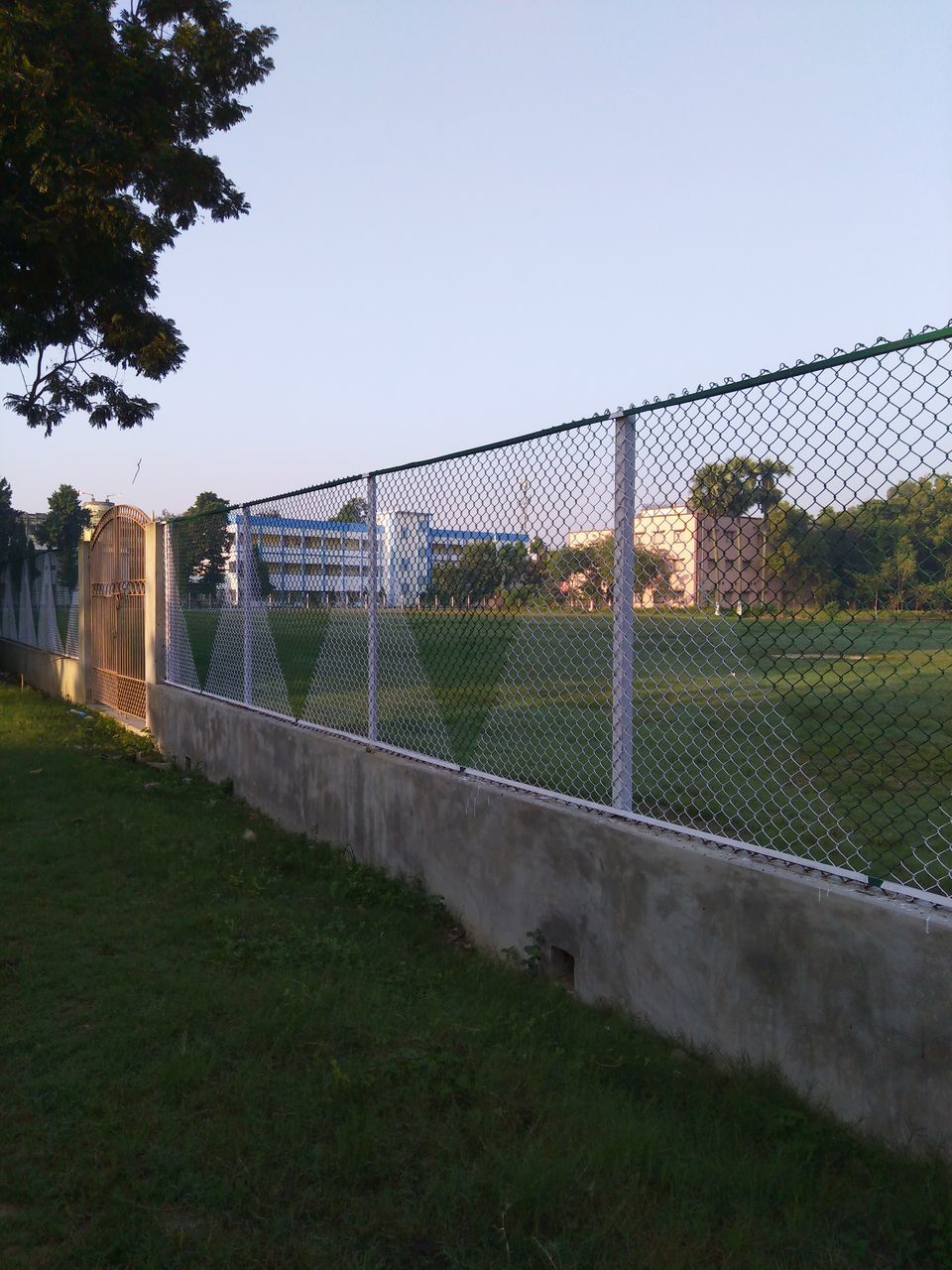 grass, tree, field, outdoors, day, playing field, no people, sky, clear sky, sport, growth, soccer field, nature
