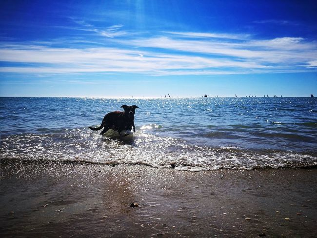 Beautiful Moments Dogs Horizon Over Water Boats And Water Summer Memories Live For The Story
