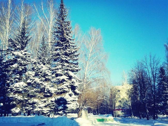 Winter Wintertime Trees