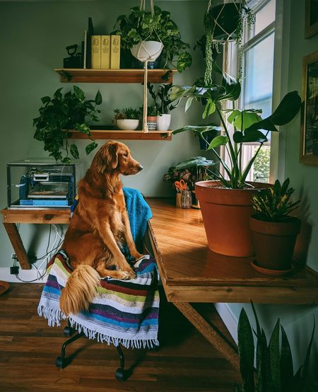 Dog sitting on table at home
