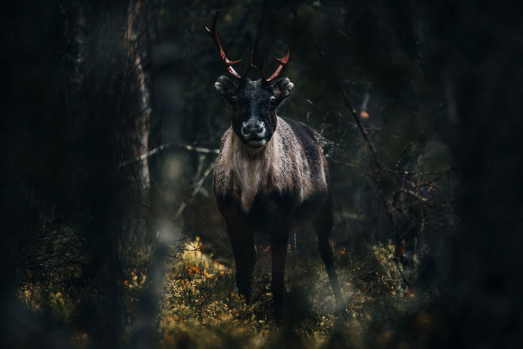 Portrait of deer in the forest