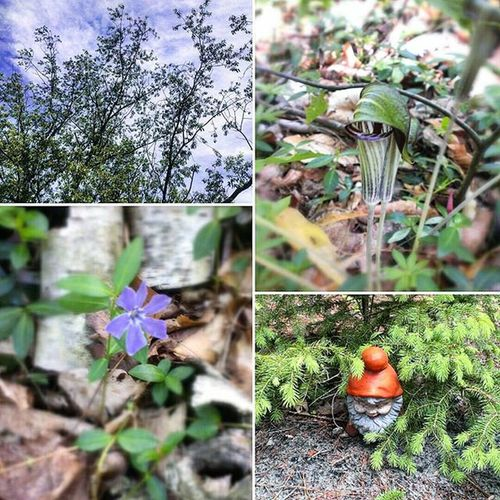 Memoirs of summer Afewofmyfavoritethings Jackinapulpit Trees Gnome Godsbeautifulcreation Breathtaking
