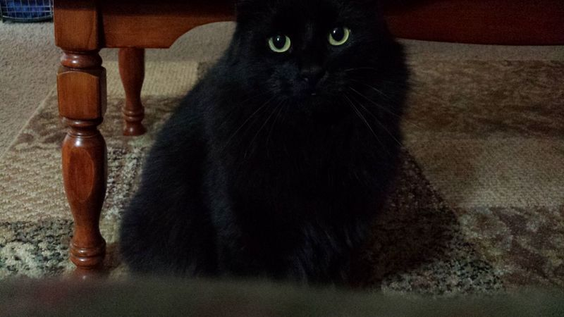 Master Grimly I Love My Cat The Eyes Say It All Wild In The Hills