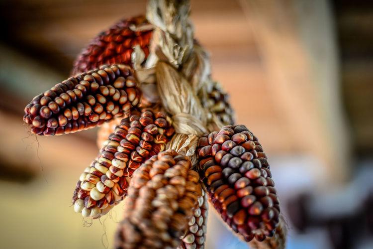 Close-up of corn hanging at market stall