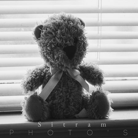 Sitram Photo's Bear Black & White Photography Taking Photos Teddybear Hello World Window