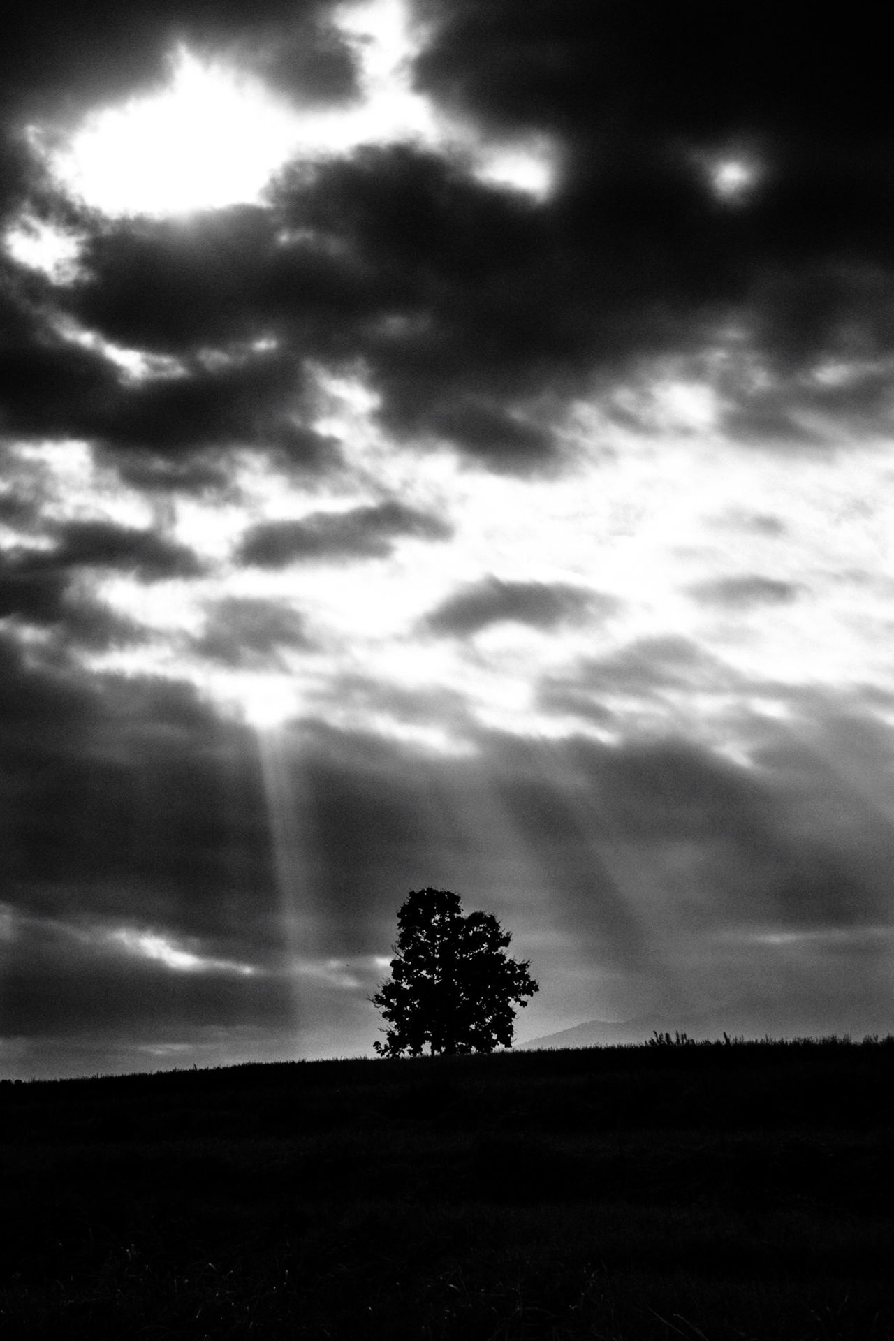 Silhouette tree growing on field against sky