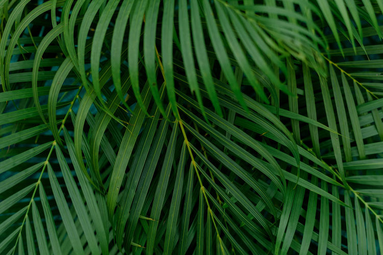Closeup nature view of green leaf and palms background. flat lay, tropical leaf used as a background