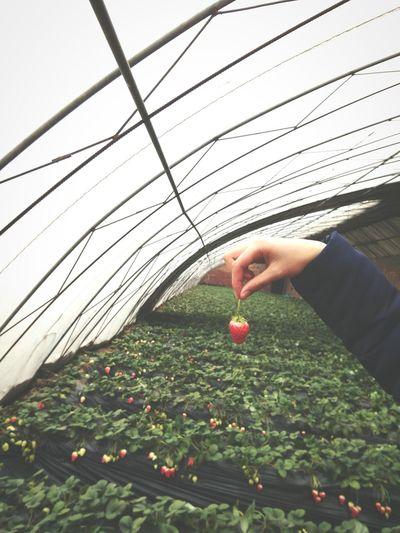 草莓 告诉你