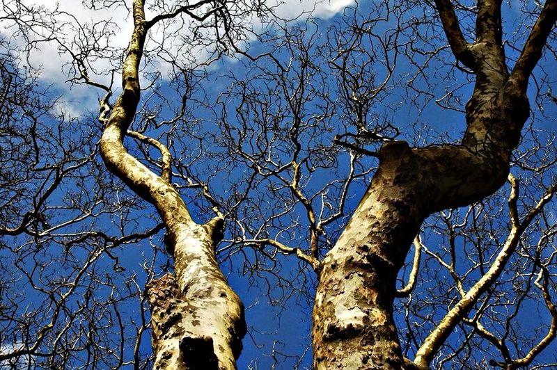EyeEm Porto Pure Photography Taking Photos Trees