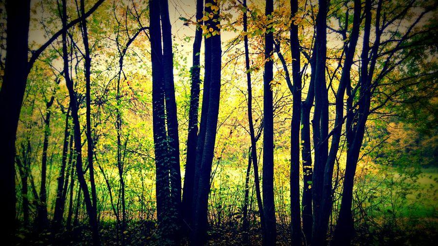Made by Sony Xperia M4 Aqua Autumn Autumn Colors Autumn Leaves Castle Castle Park Grass Körmend Landscape Mushroom Nature Obelisc River Sky Tree Trees Walk Water Woods