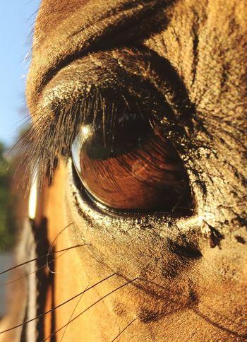 Eye Horse Sun Horseeye