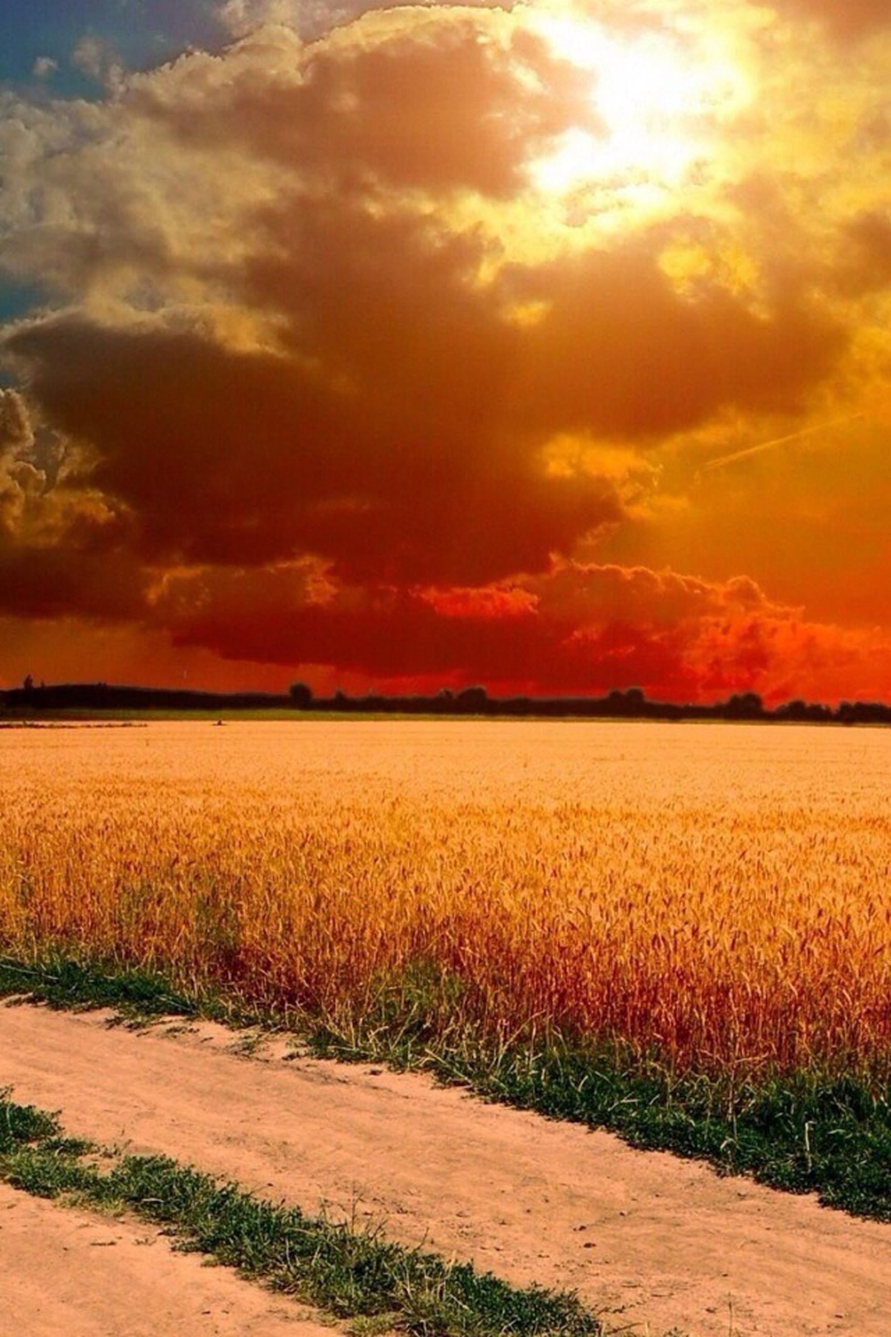 sunset, field, sky, tranquil scene, tranquility, beauty in nature, landscape, scenics, grass, rural scene, agriculture, growth, nature, orange color, cloud - sky, farm, plant, idyllic, cloud, crop