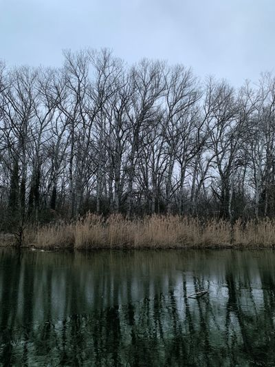Bare trees by lake in forest against sky