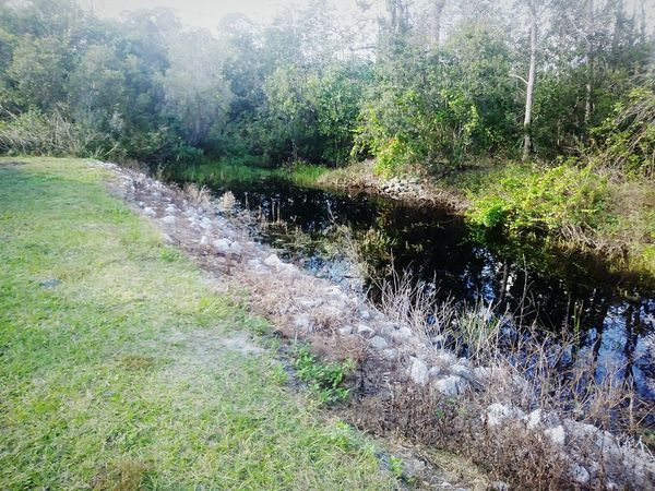 Water Day Wet Nature Outdoors Growth No People Grass Beauty In Nature Sunlight Tranquility Reflection Fall Colors Canals And Waterways RetentionSystem Drainage Channel