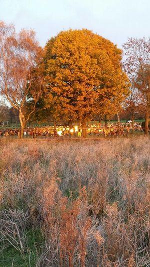 Stafford crematorium. . Golden glow.