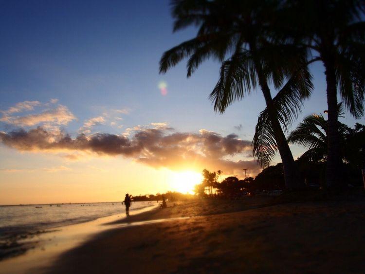 Alamoanabeach Hawaii Sunset Silhouette Palm Tree Beach Scenics Nature Beauty In Nature Vacations Sea Sky first eyeem photo