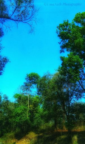 Forest Tree EyeEm Best Shots EyeEm Nature Lover EyeEm Gallery colour of life Sky Nature Green Color Blue No People Outdoors Low Angle View Day Beauty In Nature Growth Branch