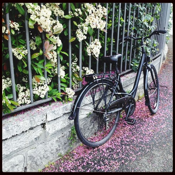 Bicycle Thieves - tribute to Vittorio de Sica Bike Waiting Beauty Among The Wilted  Nature