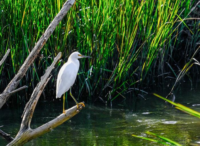 Bird perching on a lake