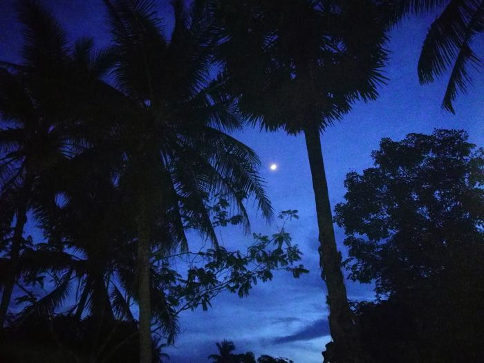 Low angle view of silhouette palm trees against sky at night