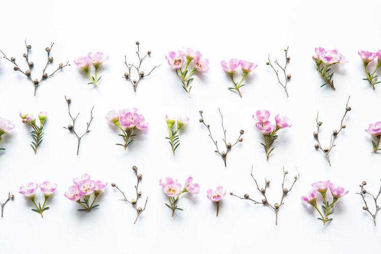 Pink Flowers Against Sky