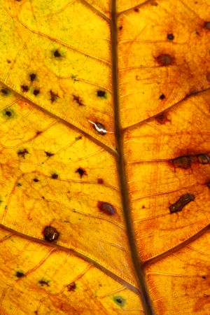 Leaf Closeup Animal Themes Autumn Backgrounds Change Close-up Day Full Frame Leaf Maple Nature No People Outdoors Yellow