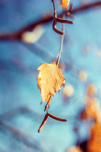Leaf Nature Sky Beauty In Nature Tree Branch Branches Macro Macro Photography Autumn
